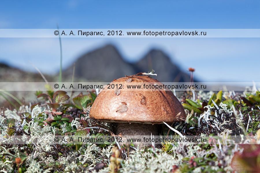 Грибы на склонах горного массива Вачкажец